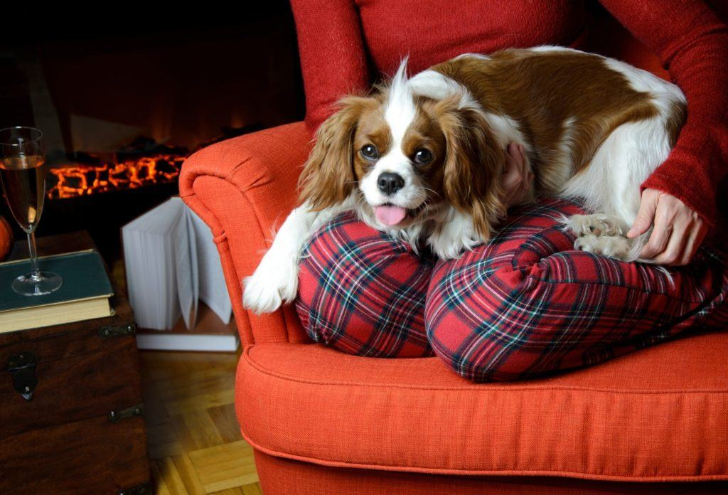 Lady relaxing with her dog (Cavalier King Charles spaniel) by the fireplace